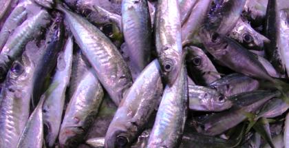 tote Fische auf dem Markt