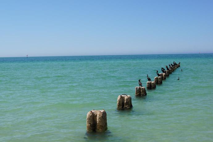 Clearwater-Beach05