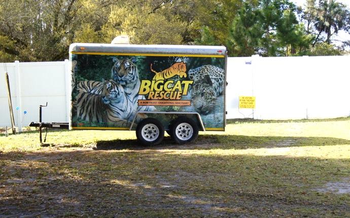 Big-Cat-Rescue-Tampa