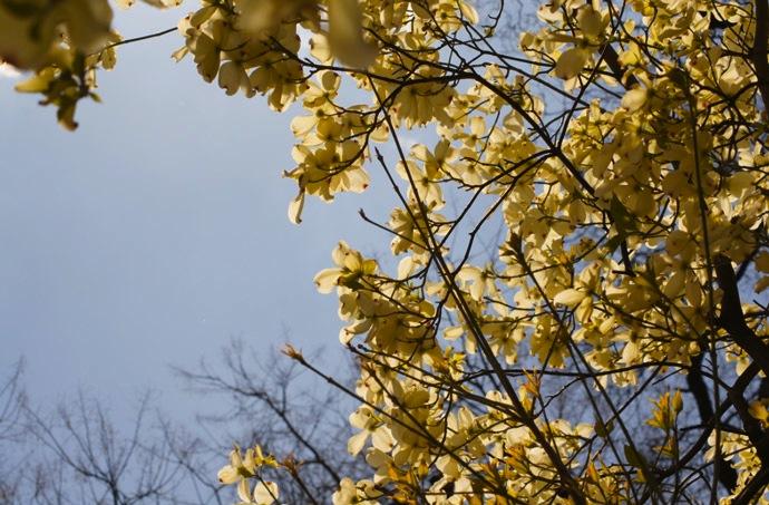 weiße-Blumen