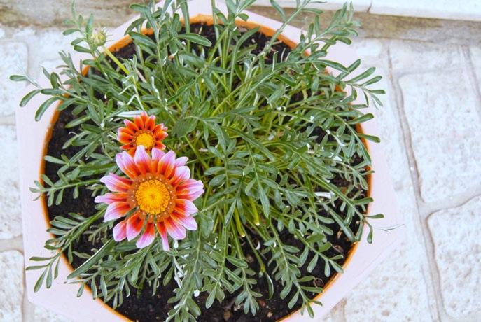 Blumen-Chalkidiki