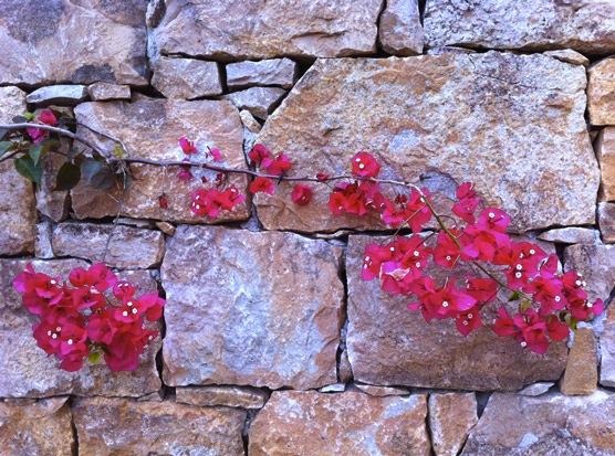 Blumen-vor-Wand
