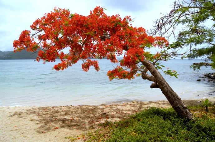 Bucht-pigeon-island-karibik