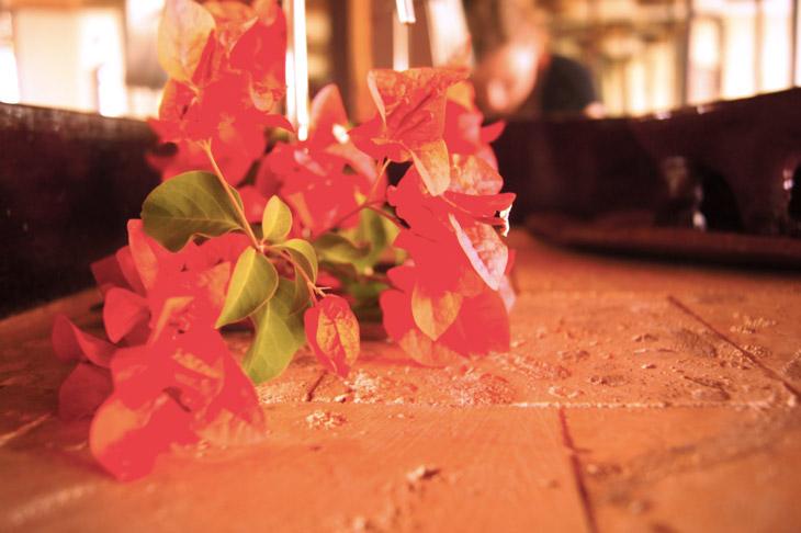 Flowers-Karibik
