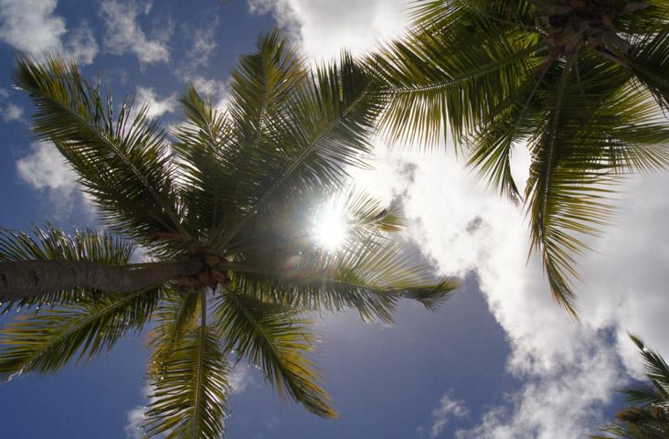 Palmen-Himmel