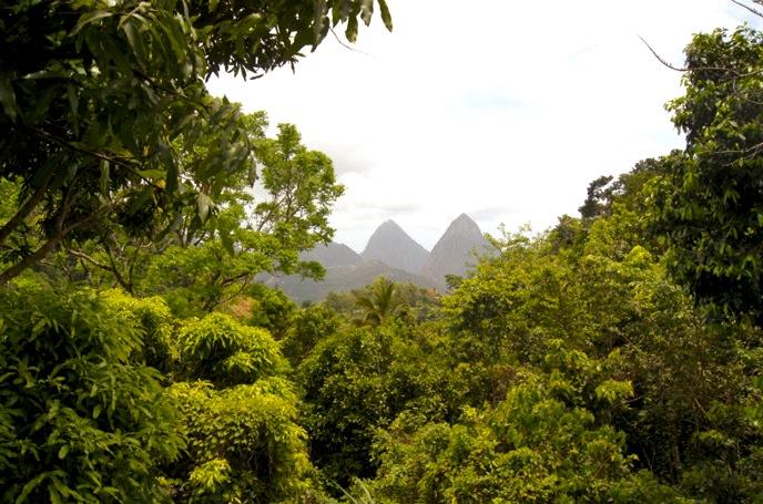 Regenwald-Pitons