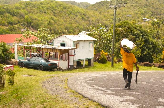 Regenwald-Saint-Lucia