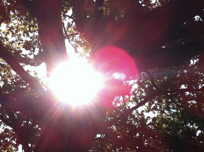 Sonnenschein-Wald