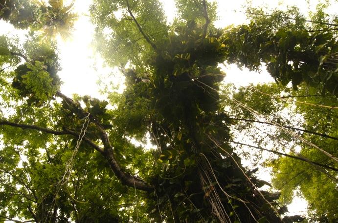 Vegetation-Regenwald