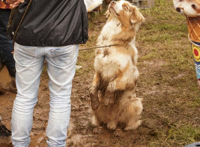 Hund-im-Schlamm