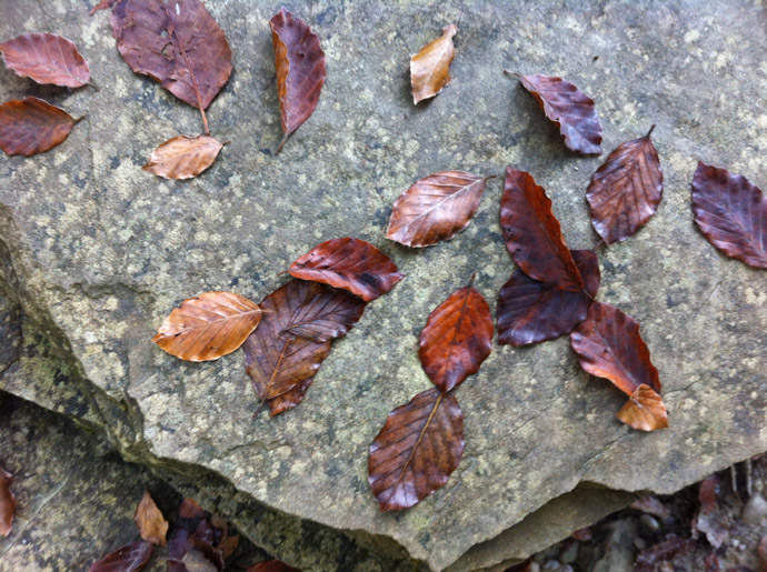 Herbst-flora