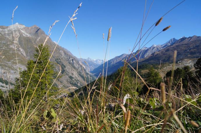 Panorama-Zermatt
