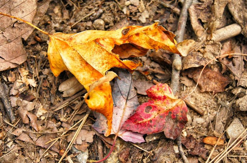 Herbst-Laub-bunt