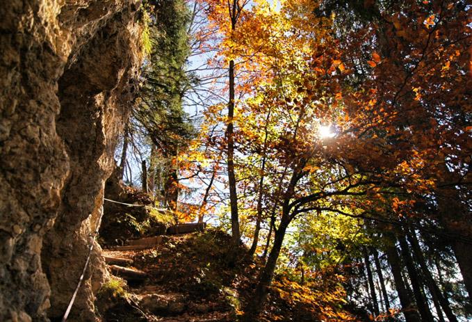 Herbstwald-Wanderweg