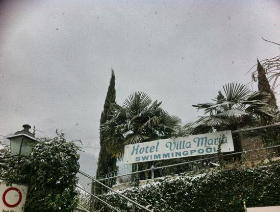 Palmen-im-Winter