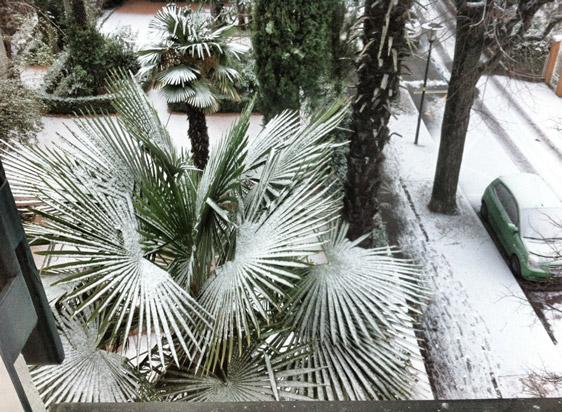 Palmen-mit-Schnee