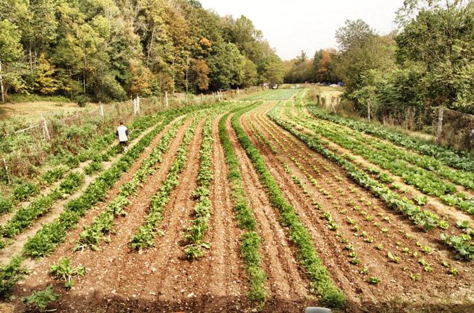 biologisch-dynamische-Landwirtschaft