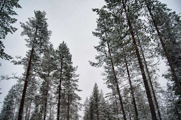 Wald-Finnland