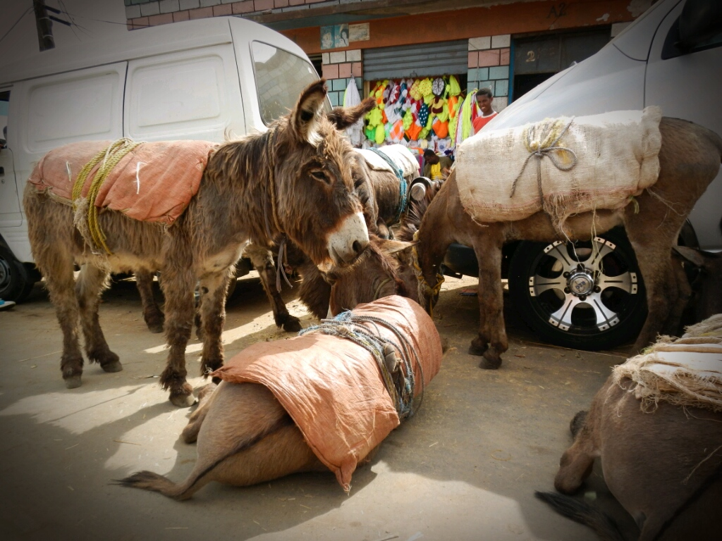 Esel-Äthiopien