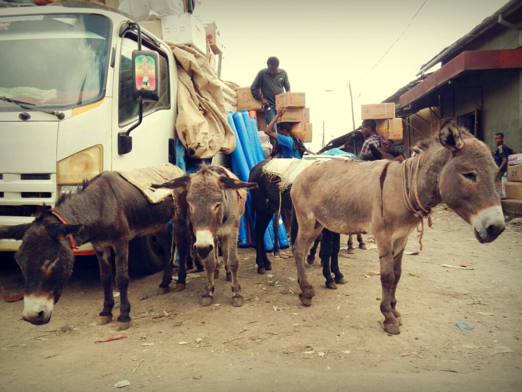 Esel-Mercato-Addis-Abeba-Äthiopien