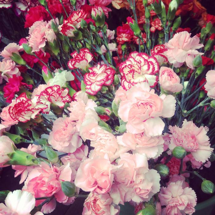 Graz-Blumen