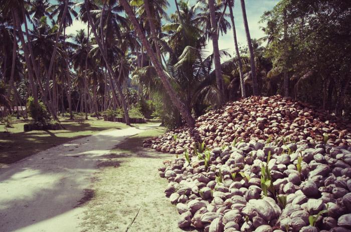 Kokosnuss-Seychellen