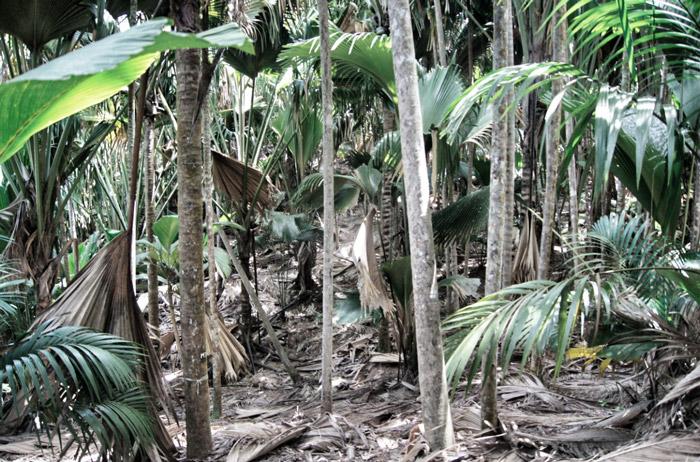 Palmengarten-Palin