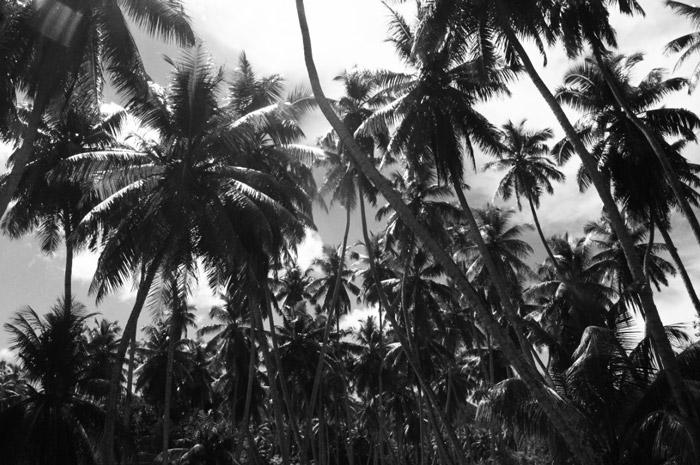 Palmengarten-Seychellen