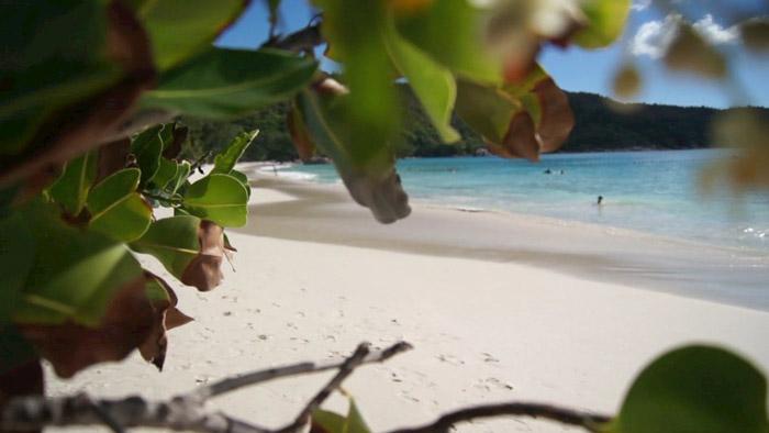 Paradies-Seychellen-Palin