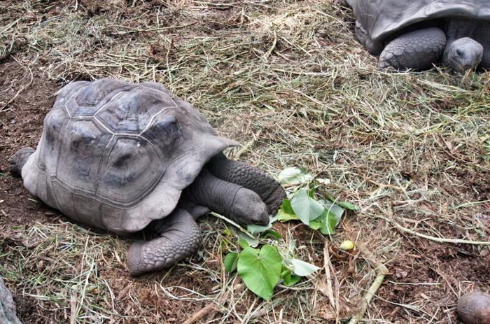 Schildkröten-Seychellen