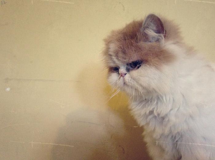 Süßeste-Katze-der-Welt
