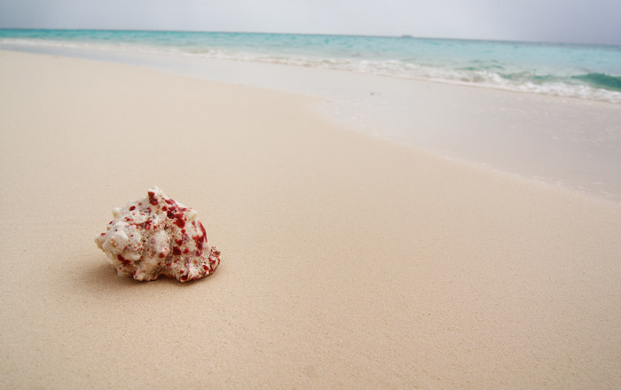 Muschel-Strand-Insel