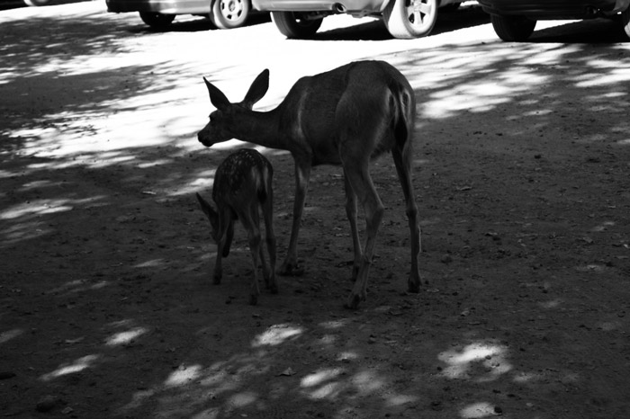 Rehe-Yosemite-National-Park