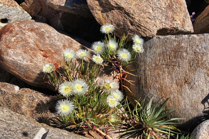 Blumen-Namaqualand National Park