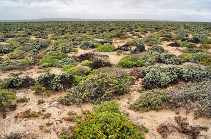 Südafrika-Namaqualand National Park