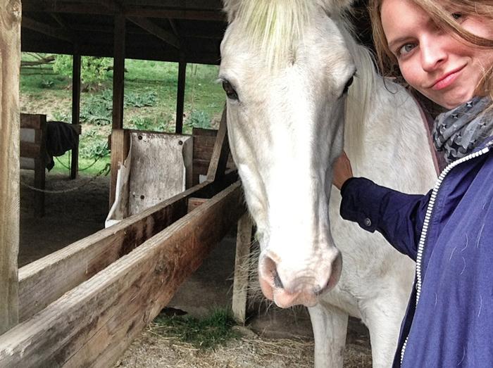 Christine-Neder-Pferde