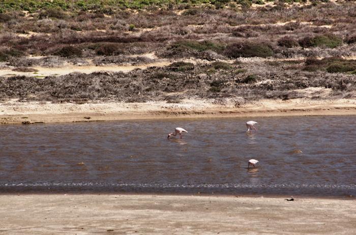 Flamingos-Südafrika