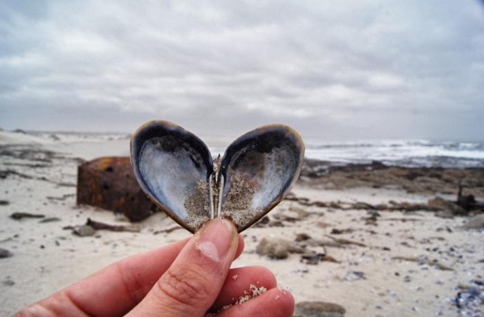 Muschel-in-Herzform