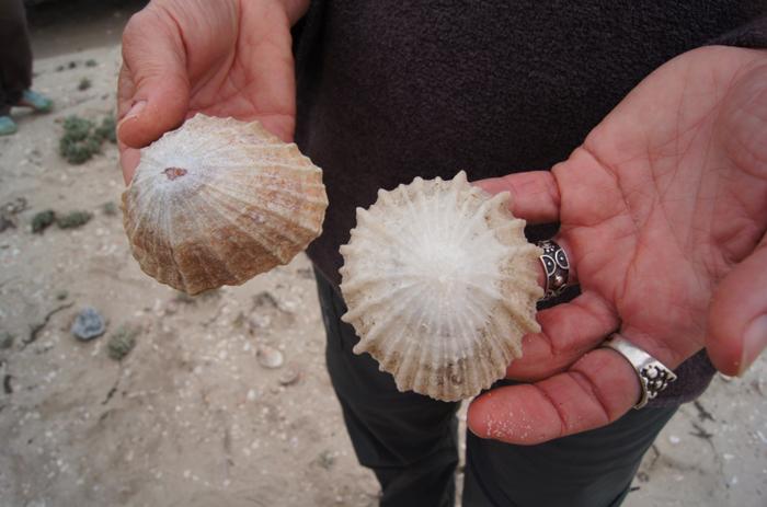 Muscheln-Küste-Südafrika-Safari