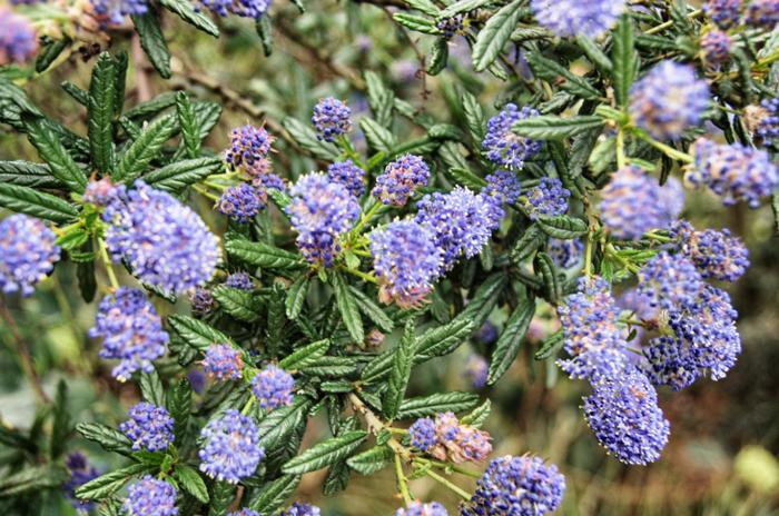 Neuseeland-Blumen