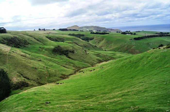 Octago-Peninsula-Neuseeland