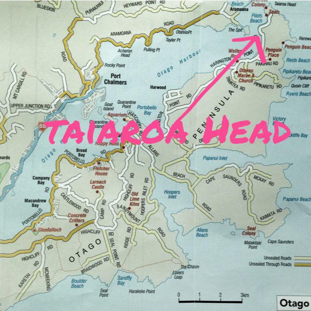 Taiaroa Head