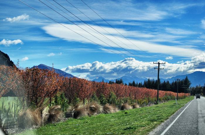 Vegetation-Neuseeland