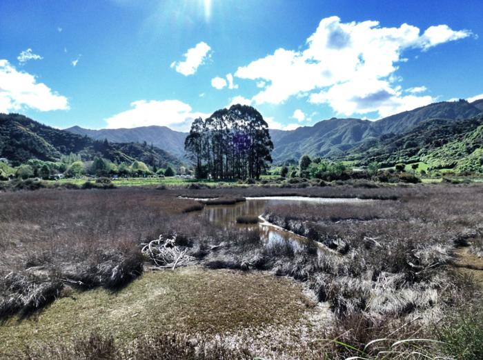 Wanderung-Neuseeland-Able-Tasman