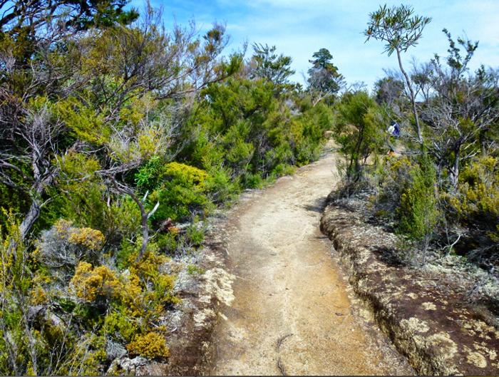 Wanderweg-Able-Tasman