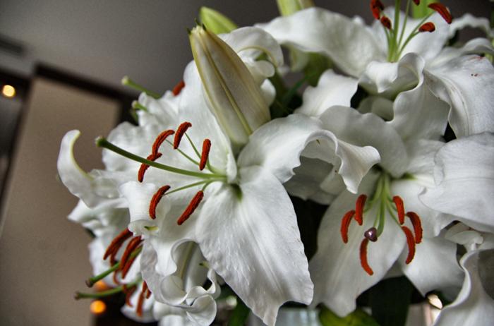 Blumen-Sofitel-Auckland