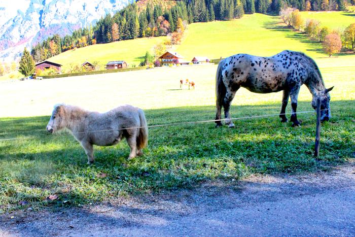 kleinstes-Pony-der-welt