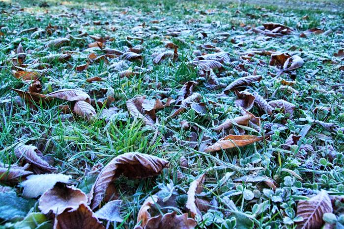 Frost-Wiese