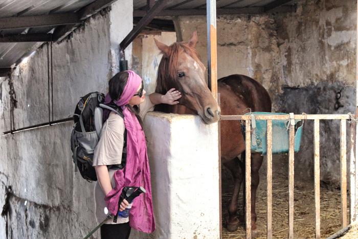 Pferd-und-Wanderer