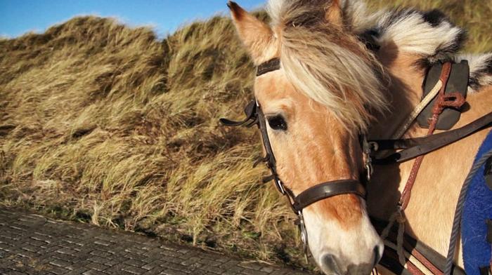 Pferdekutsche-Juist
